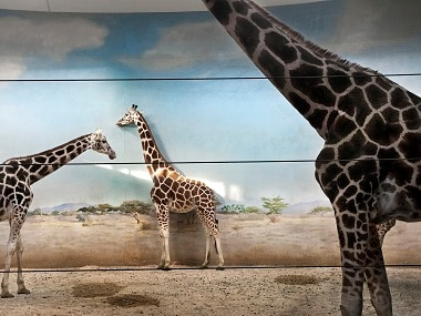 Giraffe Behind the Door is photographer Asmita Parelkar's compelling look at animals in captivity