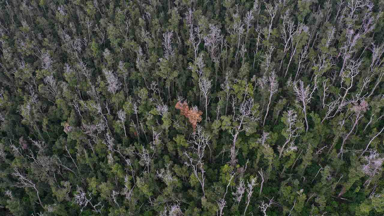 Treebuddy looks to fix reforestation flaws, enable planting of millions of trackable trees every year