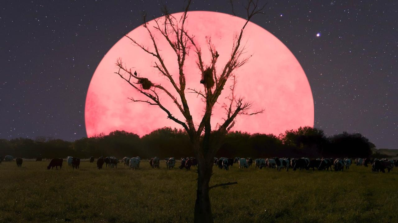 What is a Pink Supermoon? Catch the biggest brightest full moon in India on 8 April 8.05 am IST