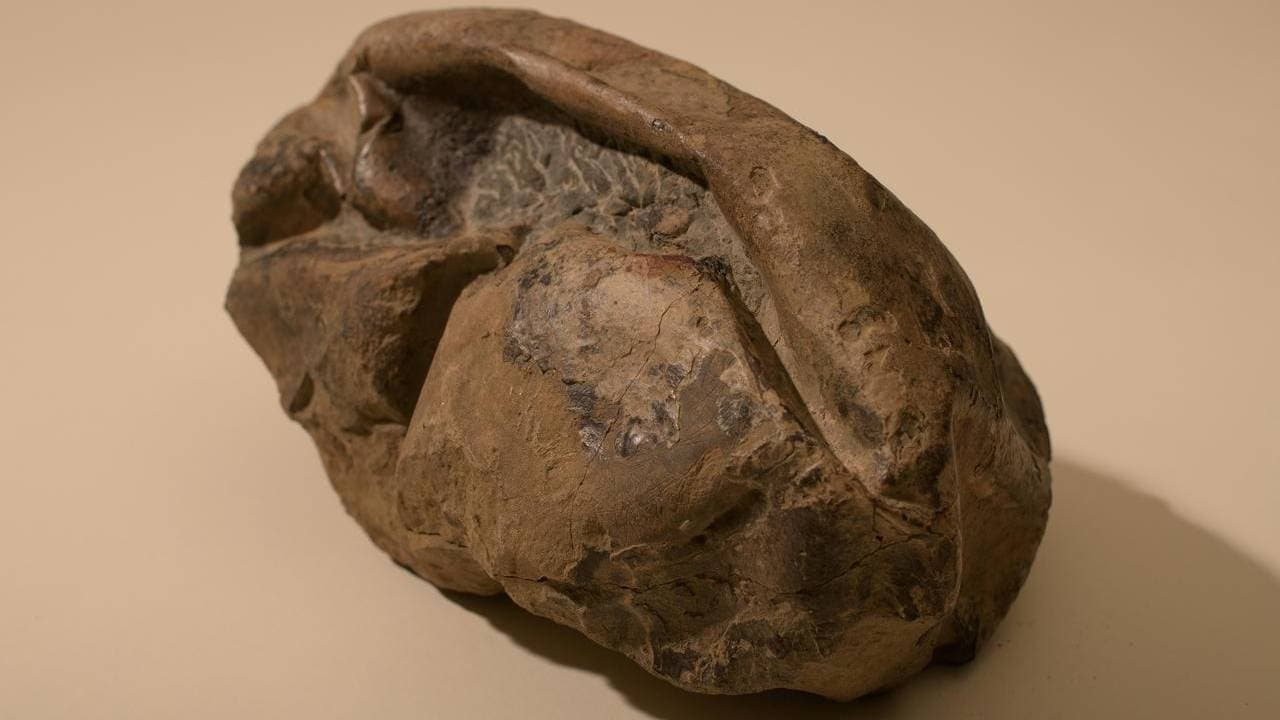 Fossils from Mongolia, Argentina show some dinosaurs laid soft-shelled eggs