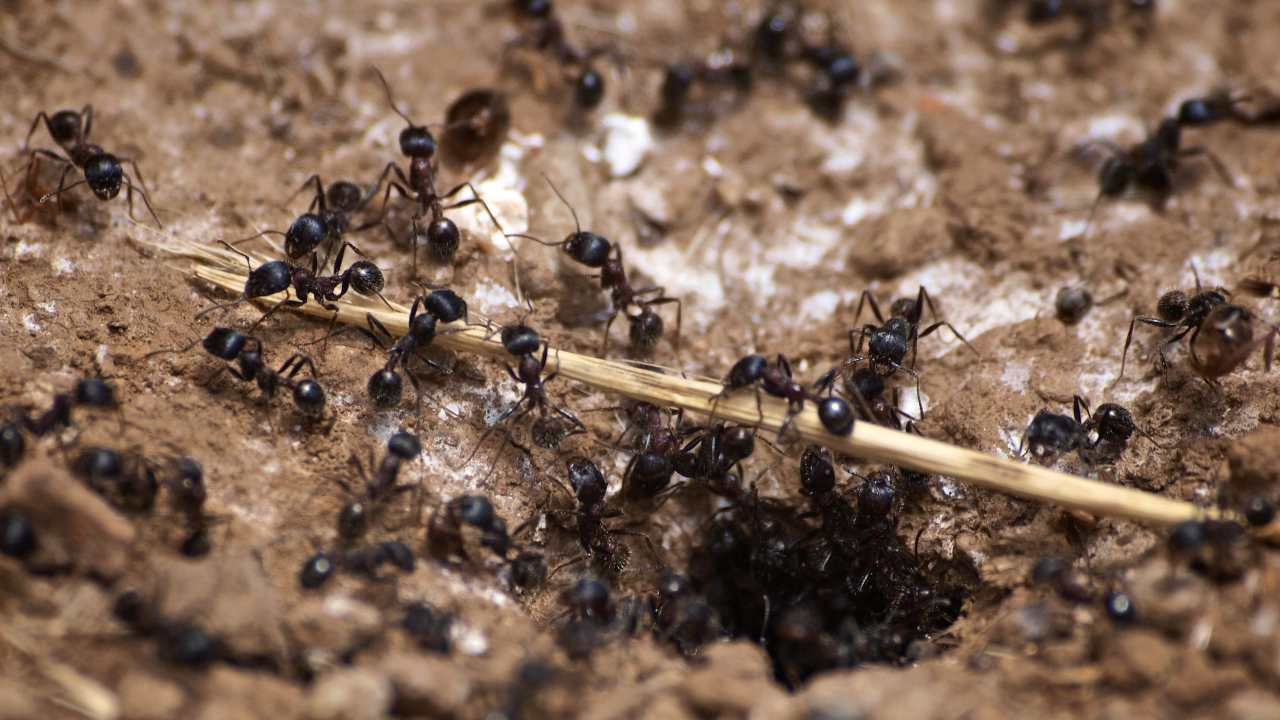 Ant colony working a twig on a guided trail walk at Bouverie Preserve, Sonoma. Image credit: Ingrid Taylar/Flickr
