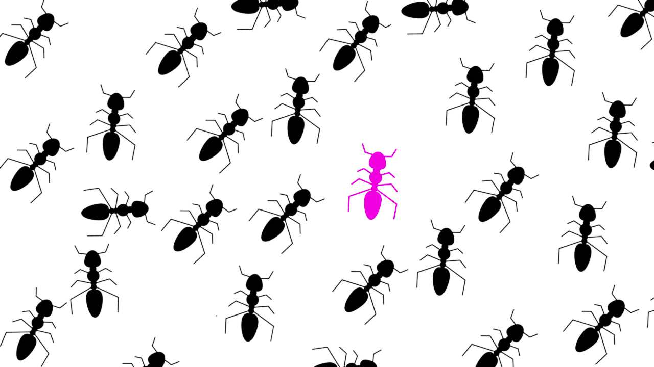 Social insects like ants build colonies and have a sociological element to behaviour and biology on top of its own. Image: Hokkaido University