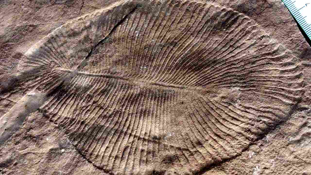 Unlikely fossil dug up in Bhimbetka ties evolution of modern life in India, Australia