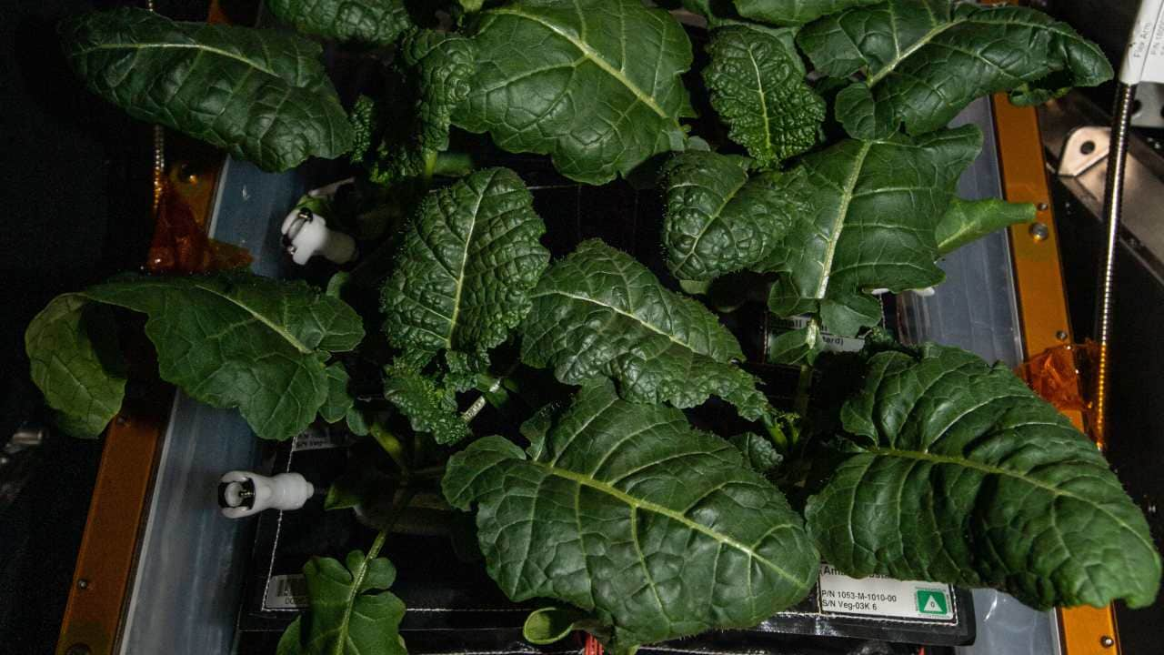 New strains of bacteria found on the space station may help astronauts grow plants on Mars