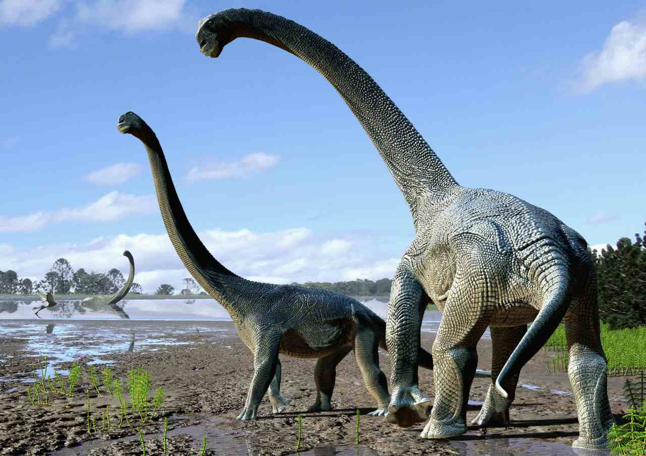 Remains of massive plant-eating lizard likely the largest sauropod fossil ever found