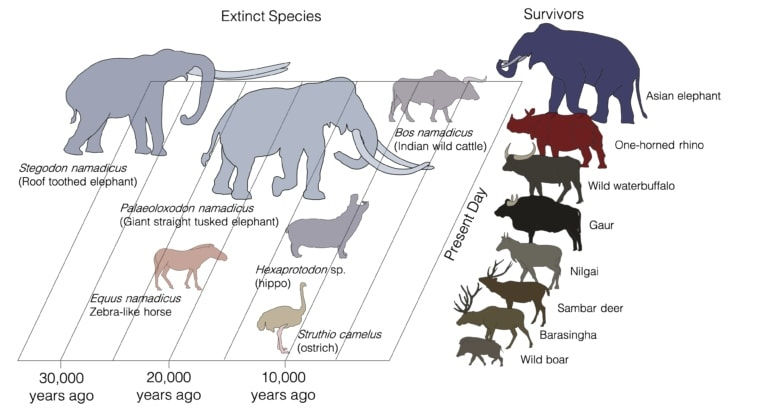 Indian beasts that existed 50,000 years ago could hold the key to evolution and extinction
