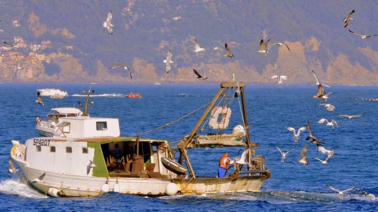 Fishing boats that dredge their nets release carbon equivalent to aviation