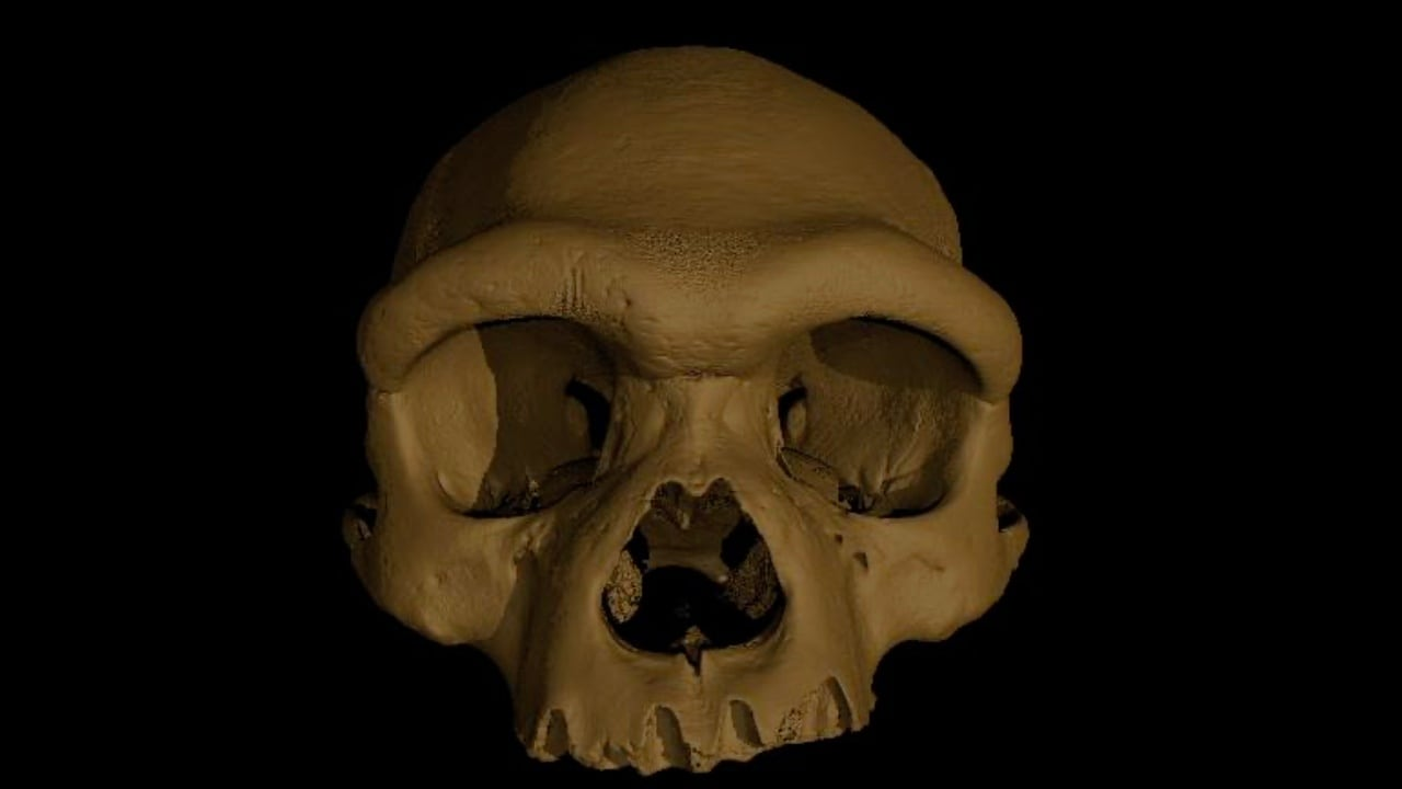 In an undated image from Xijun Ni, a digital reconstruction of the cranium nicknamed
