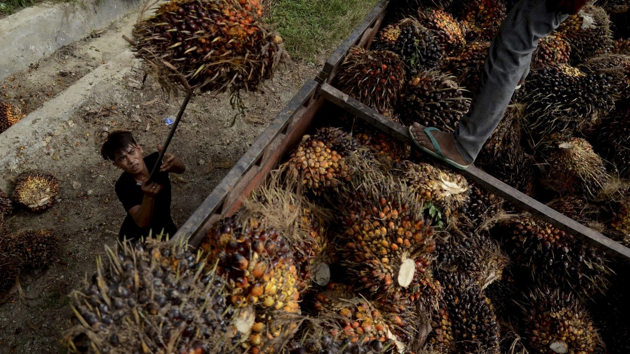 Representational image of palm oil seeds. Credit: Reuters