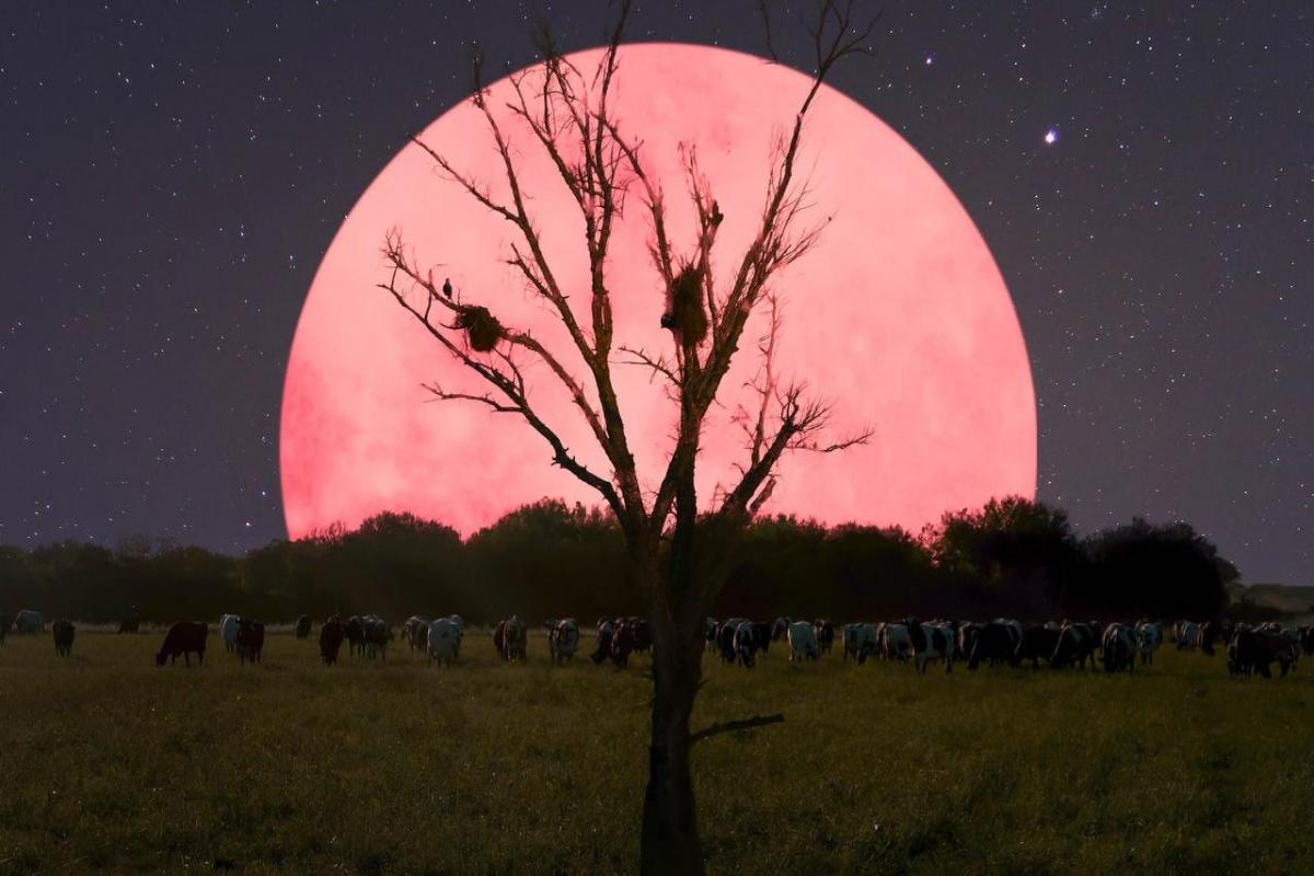 Luna Rosa y otros fenómenos astrónomicos en abril.