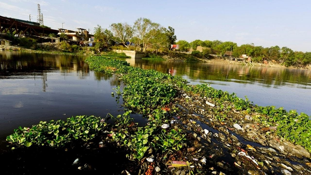 Delhi targets 25% green cover by 2025; officials say it's possible only if DDA gives land on Yamuna river banks to forest department - Firstpost