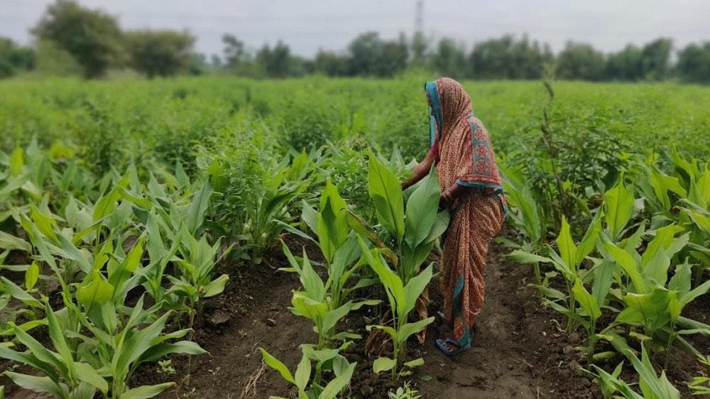 Maharashtra polls: In Wardha, farmers deadlocked by no loan waivers and no scope for fresh crop loans - Firstpost