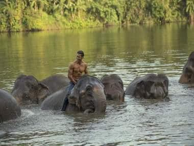 Junglee box office collection: Vidyut Jammwal's action-adventure film makes Rs 21.20 cr in first week