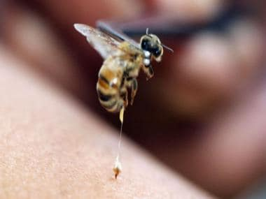 Smart syringe-needle inspired by insects promises painless, skin-friendly shots