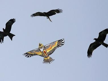 On Makar Sankranti, Independence Day, a sky full of kites becomes a death trap for birds