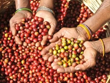 Araku coffee, a brand from the Eastern Ghats that won acclaim in France, is making its way home