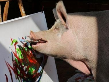 Pigcasso, the painting sow, takes center stage at South African farm with artwork selling for nearly $4,000