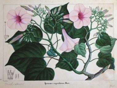 The Weight of a Petal: In its latest edition, Marg magazine chronicles India's botanical art