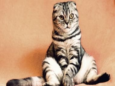 Scientists discover that cats can distinguish between words that humans say