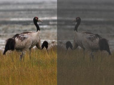 In Bhutan, widespread plastic use further threatens vulnerable black-necked cranes