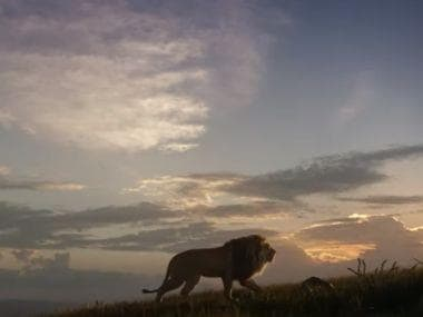 The Lion King Hindi trailer: Shah Rukh Khan's son Aryan suits Simba's vulnerability in Disney's live-action remake