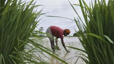 Union Budget 2019: Govt will invest widely in agri infra; support entrepreneurship in farm sector