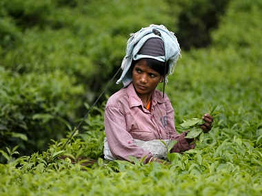Speciality tea: Tripura set to scale up white tea production after success of pilot projects; a kg fetches a record Rs 10,000 a kg