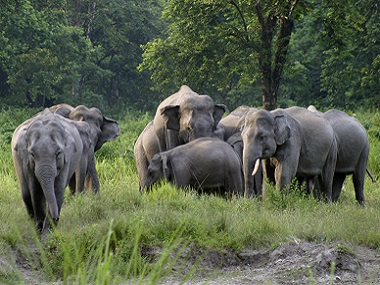 Like humans, grandparents play key role in child-rearing among elephants, great apes, cats