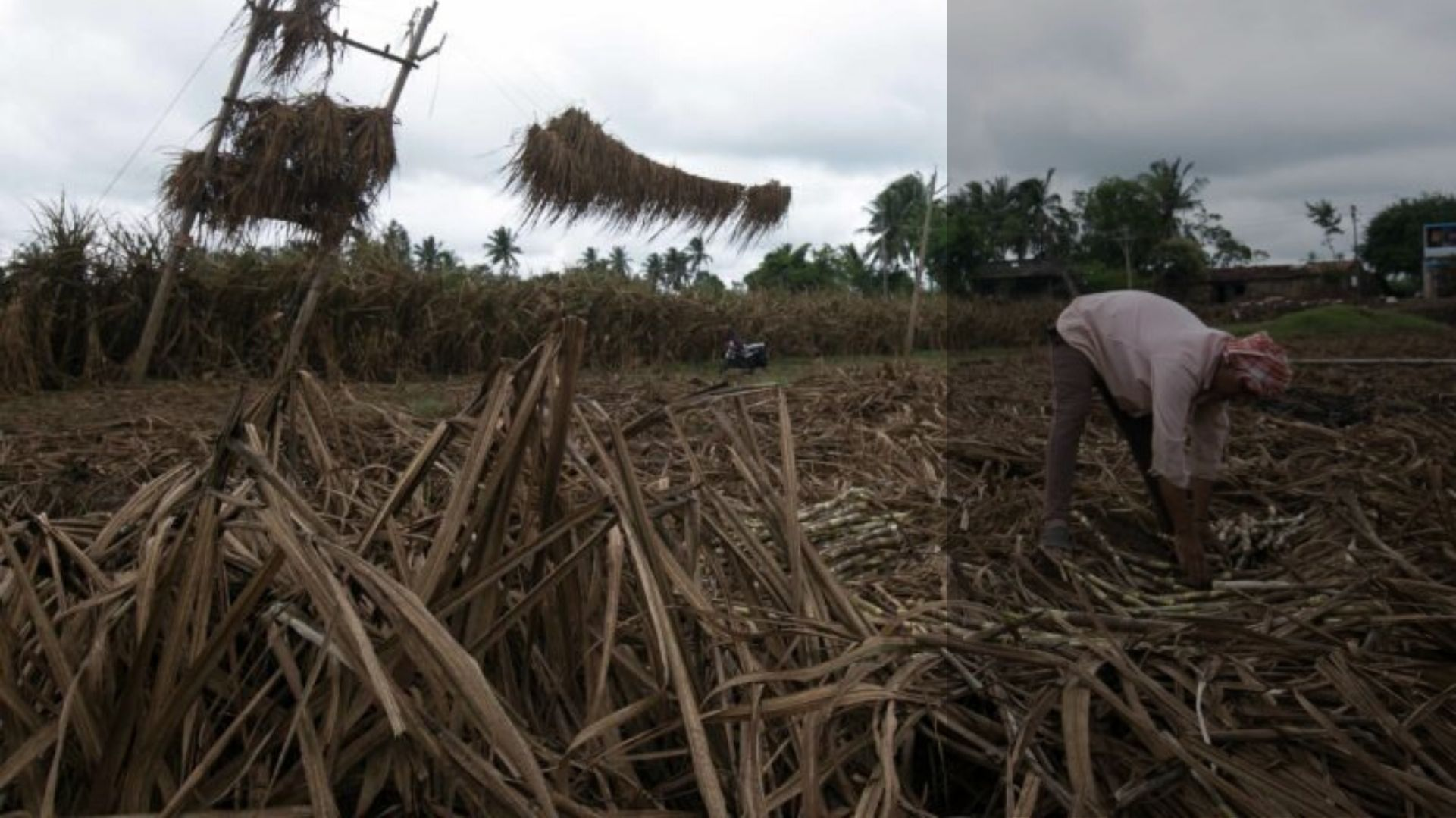 Recent floods force farmers at Maharashtra-Karnataka border to straddle two states, owing to compensation policies