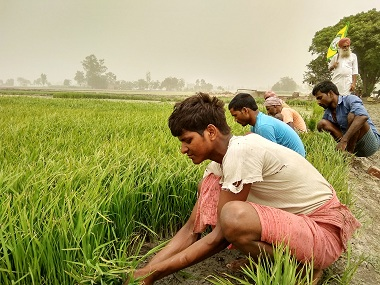 Govt plans to incentivise contract farming: Centre should encourage large firms to be part of plan; decision will bring transparency of purchases and sales