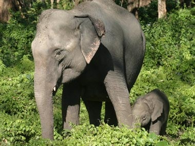 Baby elephants have become a status symbol in Sri Lanka. Reuters