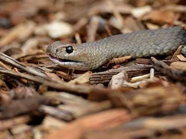 Representational image of a snake. AFP