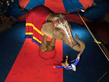 AWBI to crack down on use of ailing animals in circuses