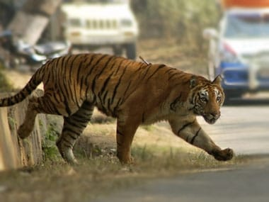Two tigers found dead in Tamil Nadu reserve