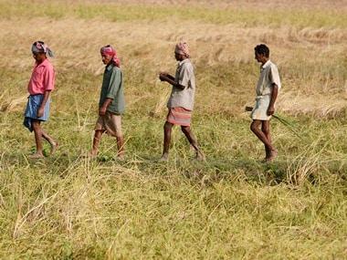 File photo of farmers walking through a paddy field in Nandigram village