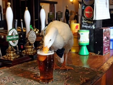Booze-loving duck gets into a brawl with a dog, lives to see another day
