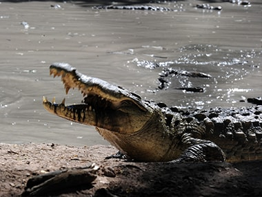 Crocodile rips off Bengaluru-based entrepreneurs forearm as he tries to save his two dogs
