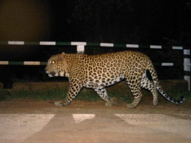 After another leopard scare in Bengaluru school, institution declares a holiday