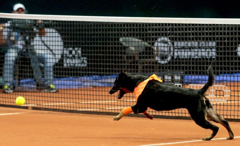 A dog runs after a tennis ball during the Brazil Open tournament in Sao Paulo, Brazil. AP