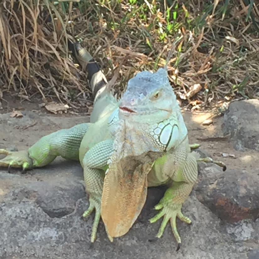 Water sprinklers in the Iguana enclosure help the reptile cool off. Firstpost/Janaki Murali