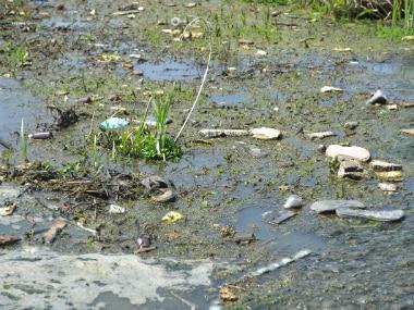 Srinagar' Hokarsar has become a dumping pit for the city. IANS