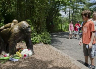 Flowers placed near a gorilla statue at the Cincinnati zoo