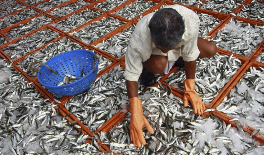 Oh fish! Whats wrong in aquaculture and why one needs to educate govt on new fish farm policy