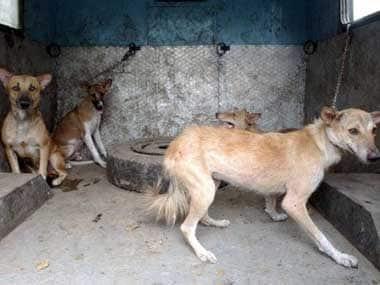 Dogs representational image. AFP