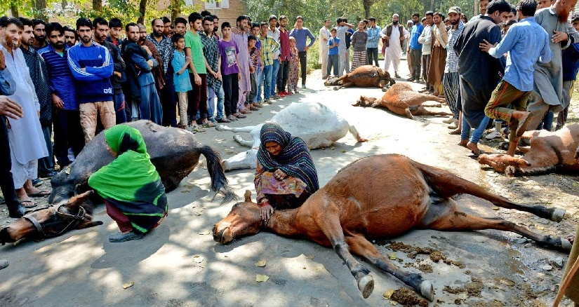 Nomads mourn their killed horses. Image courtesy: Facebook
