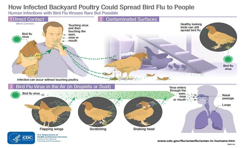 Image courtesy: US Department of Health and Human Services (www.cdc.gov/flu/avianflu)