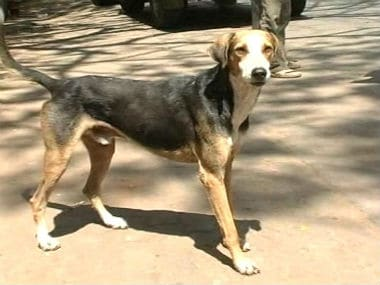 Now, gold coins for culling stray dogs in Kerala