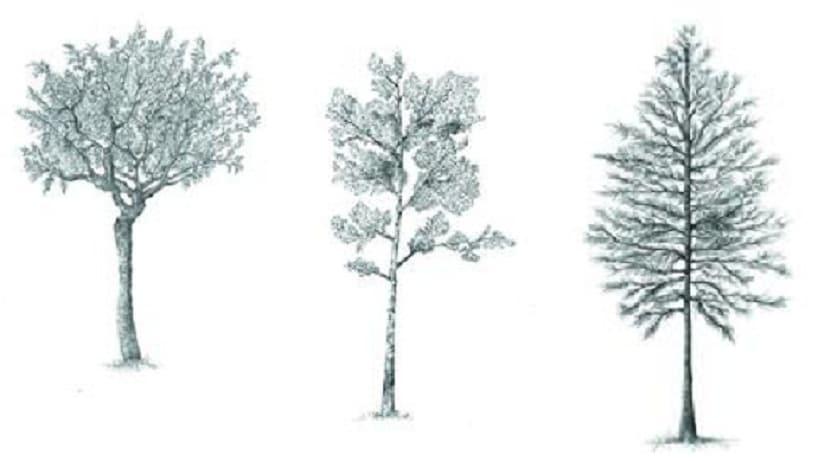 tree strip 825