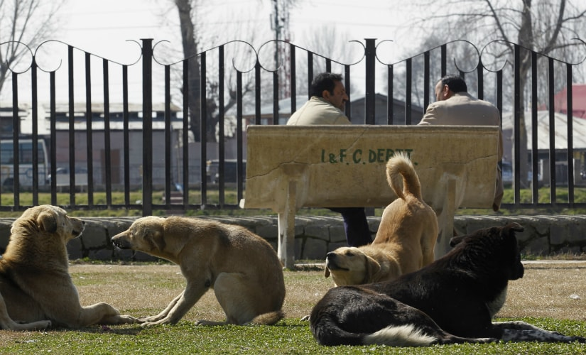 Curbing stray dog menace: Animal welfare boards approach deeply flawed, unscientific and unsavoury