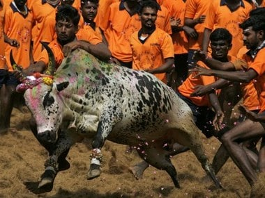 A file image of youngsters attempting to catch a bull during a bull-taming festival known as Jallikattu. AFP